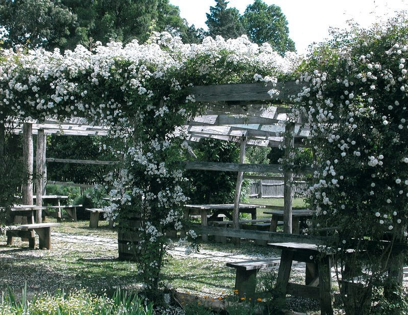 Find Shade Under Beatifully Scented Flowers on The Arbor